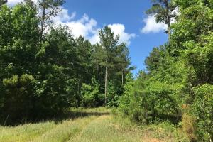 King Fisher Road Hunting and Timber Investment Tract in Hale, AL (23 of 30)