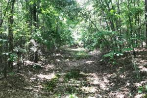 King Fisher Road Hunting and Timber Investment Tract in Hale, AL (8 of 30)