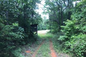 King Fisher Road Hunting and Timber Investment Tract in Hale, AL (5 of 30)