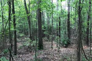 King Fisher Road Hunting and Timber Investment Tract in Hale, AL (4 of 30)