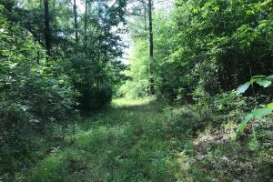 King Fisher Road Hunting and Timber Investment Tract in Hale, AL (11 of 30)
