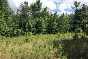 King Fisher Road Hunting and Timber Investment Tract in Hale, AL (17 of 30)