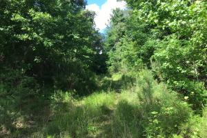 King Fisher Road Hunting and Timber Investment Tract in Hale, AL (28 of 30)