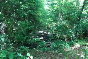 King Fisher Road Hunting and Timber Investment Tract in Hale, AL (10 of 30)