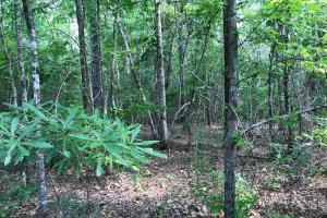King Fisher Road Hunting and Timber Investment Tract in Hale, AL (7 of 30)