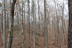 Marbury Waterfront Development, Hunting, and Timber Investment in Elmore, AL (18 of 25)