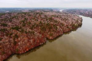 Marbury Waterfront Development, Hunting, and Timber Investment in Elmore, AL (9 of 25)