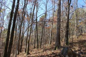Marbury Waterfront Development, Hunting, and Timber Investment in Elmore, AL (15 of 25)