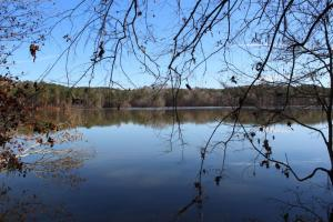 Marbury Waterfront Development, Hunting, and Timber Investment in Elmore, AL (3 of 25)