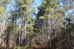 Marbury Waterfront Development, Hunting, and Timber Investment in Elmore, AL (10 of 25)