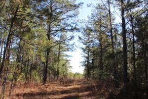 Marbury Waterfront Development, Hunting, and Timber Investment in Elmore, AL (11 of 25)