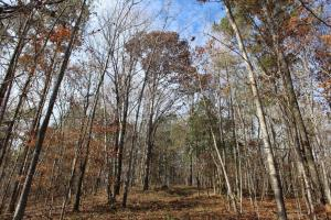 Marbury Waterfront Development, Hunting, and Timber Investment in Elmore, AL (17 of 25)