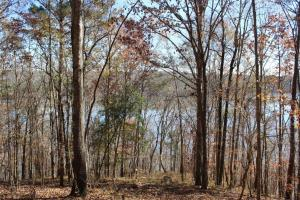 Marbury Waterfront Development, Hunting, and Timber Investment in Elmore, AL (7 of 25)