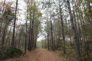 Marbury Waterfront Development, Hunting, and Timber Investment in Elmore, AL (12 of 25)
