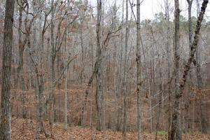 Marbury Waterfront Development, Hunting, and Timber Investment in Elmore, AL (19 of 25)