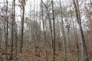 Marbury Waterfront Development, Hunting, and Timber Investment in Elmore, AL (20 of 25)