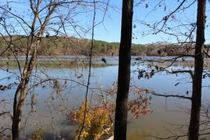 Marbury Waterfront Development, Hunting, and Timber Investment in Elmore, AL (5 of 25)