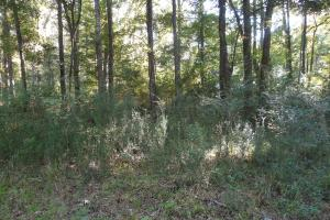 O'Quinn North Tract - 54.8ac in Jefferson, MS (3 of 20)