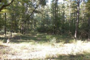 O'Quinn North Tract - 54.8ac in Jefferson, MS (11 of 20)