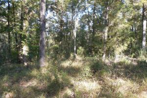 O'Quinn North Tract - 54.8ac in Jefferson, MS (12 of 20)