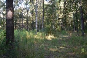 O'Quinn North Tract - 54.8ac in Jefferson, MS (13 of 20)