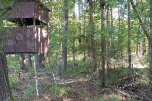 O'Quinn North Tract - 54.8ac in Jefferson, MS (5 of 20)