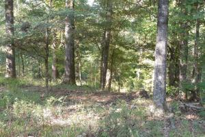O'Quinn North Tract - 54.8ac in Jefferson, MS (14 of 20)