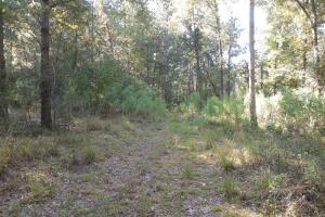 O'Quinn North Tract - 54.8ac in Jefferson, MS (15 of 20)