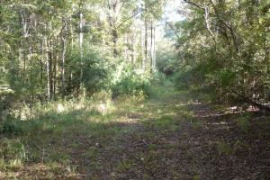 O'Quinn North Tract - 54.8ac in Jefferson, MS (16 of 20)