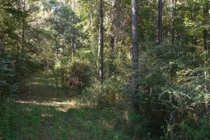 O'Quinn North Tract - 54.8ac in Jefferson, MS (17 of 20)