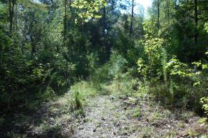O'Quinn North Tract - 54.8ac in Jefferson, MS (18 of 20)