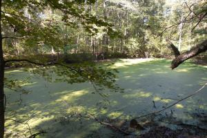 O'Quinn North Tract - 54.8ac in Jefferson, MS (19 of 20)