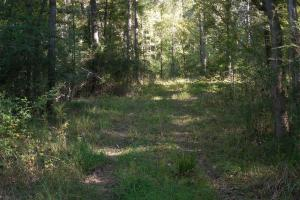 O'Quinn North Tract - 54.8ac in Jefferson, MS (2 of 20)