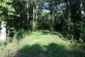 O'Quinn North Tract - 54.8ac in Jefferson, MS (6 of 20)