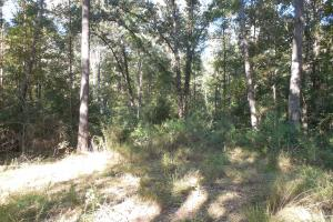 O'Quinn North Tract - 54.8ac in Jefferson, MS (7 of 20)