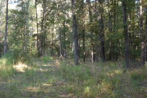 O'Quinn North Tract - 54.8ac in Jefferson, MS (8 of 20)