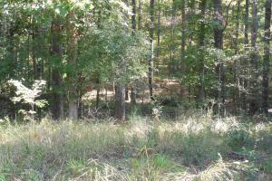 O'Quinn North Tract - 54.8ac in Jefferson, MS (9 of 20)