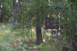 O'Quinn North Tract - 54.8ac in Jefferson, MS (10 of 20)