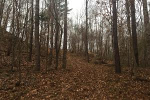 Hunting Close to Hillside Refuge - Holmes County MS