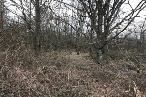 deer trail through thicket (18 of 25)