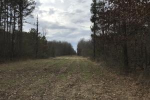 Timber Tract and Big Deer Hunting, West Carroll Parish, La. - West Carroll Parish LA