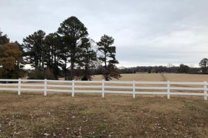 162+/- Acre Country Home & Pasture Land in White, AR (3 of 32)