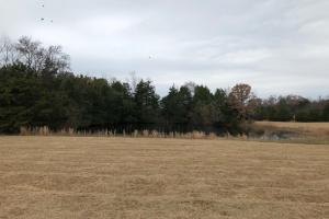 162+/- Acre Country Home & Pasture Land in White, AR (22 of 32)