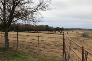 162+/- Acre Country Home & Pasture Land in White, AR (30 of 32)