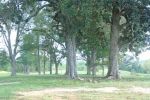 The Davenport Recreational/Hunting  Farm in Crenshaw, AL (3 of 64)