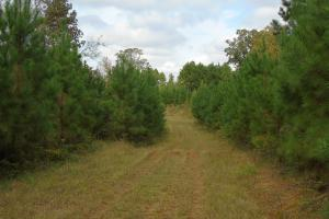 The Davenport Recreational/Hunting  Farm in Crenshaw, AL (5 of 64)