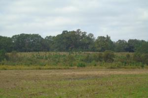 The Davenport Recreational/Hunting  Farm in Crenshaw, AL (8 of 64)