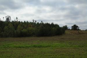 The Davenport Recreational/Hunting  Farm in Crenshaw, AL (10 of 64)