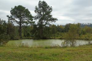 The Davenport Recreational/Hunting  Farm in Crenshaw, AL (18 of 64)