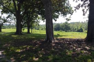 The Davenport Recreational/Hunting  Farm in Crenshaw, AL (21 of 64)